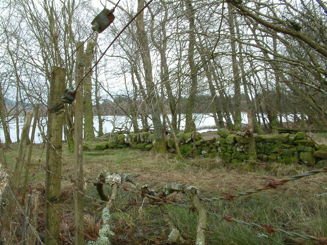 NW corner of Cardross Moss wood where it meets the lake
