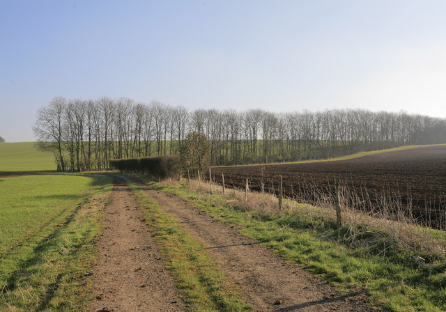 Track lined by trees from bridleway to Norton Copse