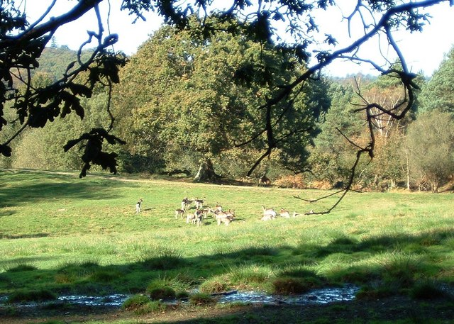Deer in the Bolderwood Deer Sanctuary