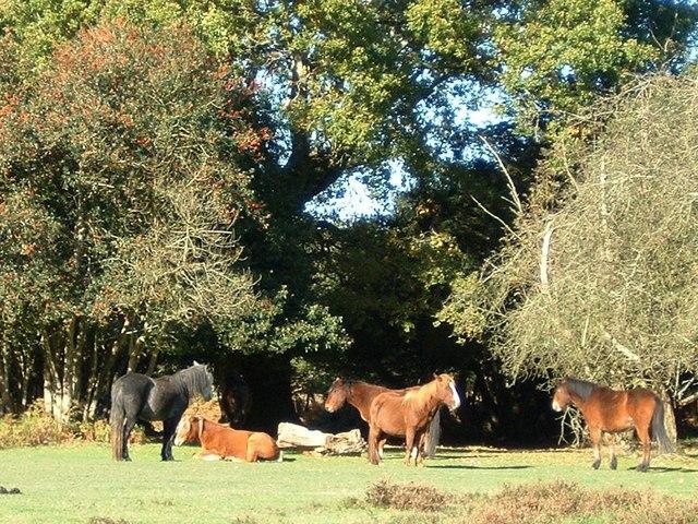 Ponies at Bolderwood car park