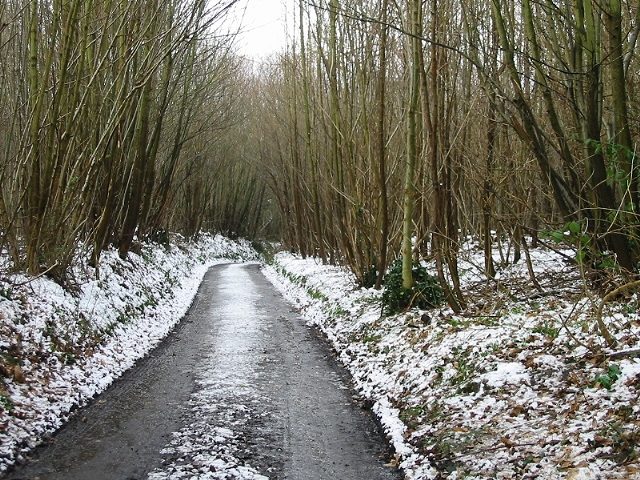 Road through the woods to Puckstone farms