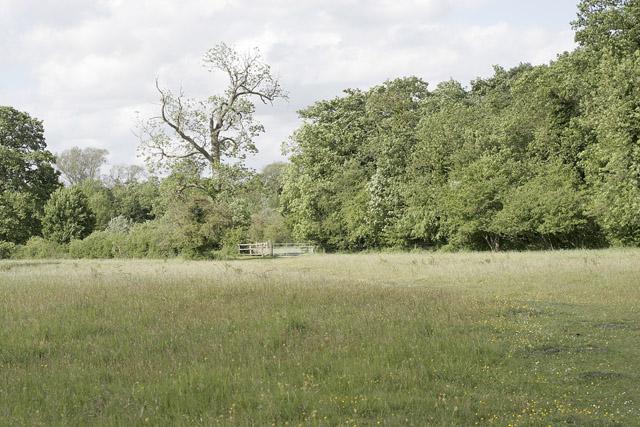 Fulbourn Fen Nature Reserve
