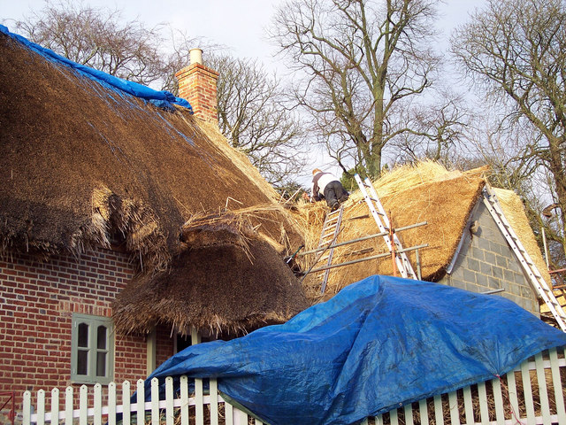 Thatching in progress at Stapleford