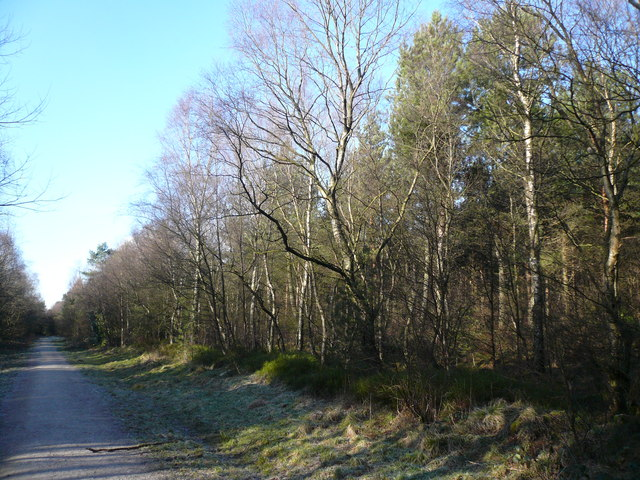 Farley Moor - Woodland Path