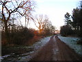 TL5748 : Borley Wood at sunset by Michael Chamberlain
