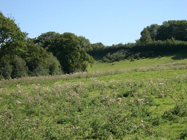 Fields below Axminster Road