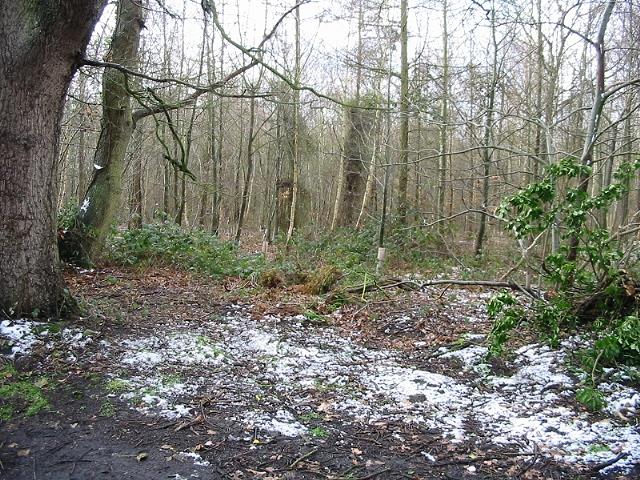 Oldridge Wood from Swanton Lane