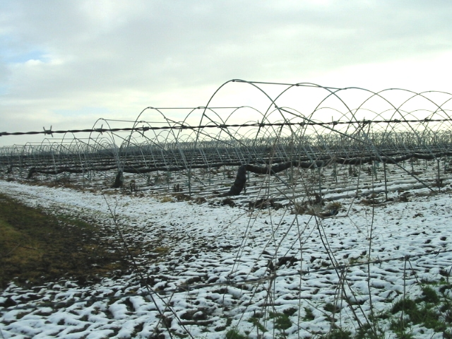 Strawberry beds in winter