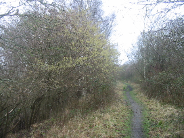 Disused railway line near Powerstock Common