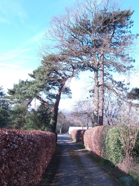 Road to the nurseries off Swife Lane