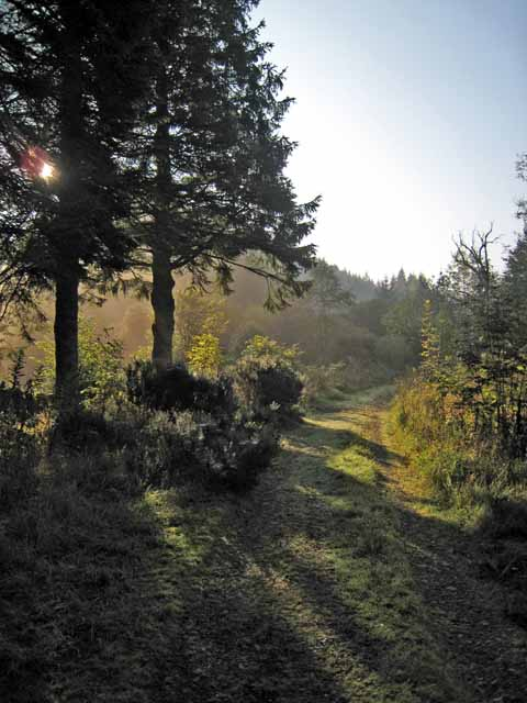 Early morning in Changue Forest