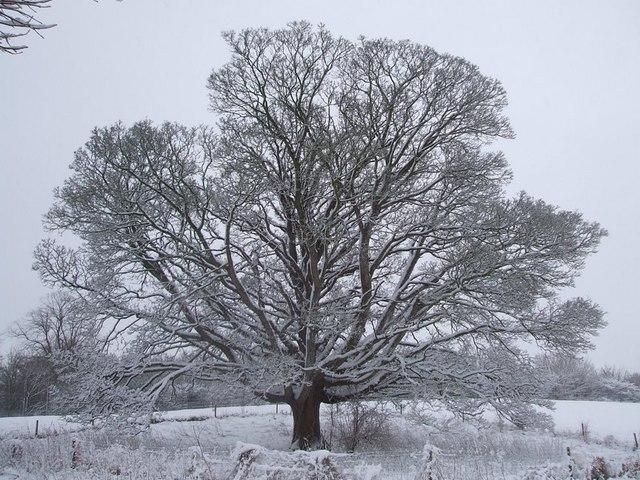 Dangerous Tree, Dawes Meadow