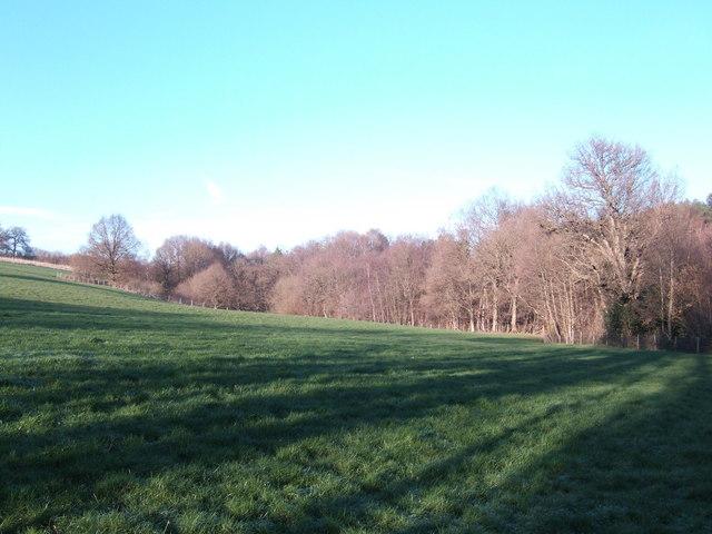 Woodland near Kilndown