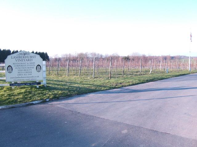 Lamberhurst Vineyard