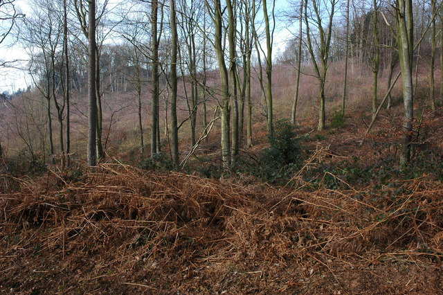 Arley Wood