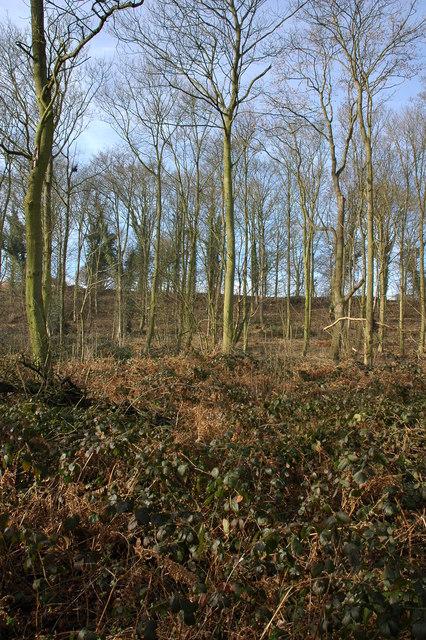 Coldridge Wood