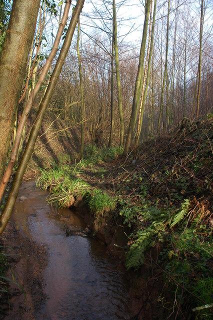 Stream below Coldridge Wood, Near Shatterford