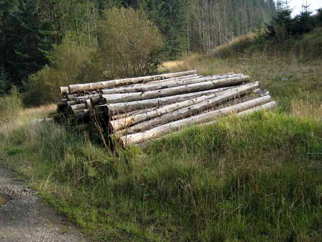 Timber stack on the West Aquaduct (sic) road