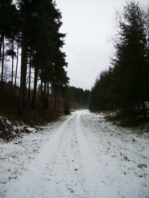 Snow covered track in Seive Dale, Dalby Forest