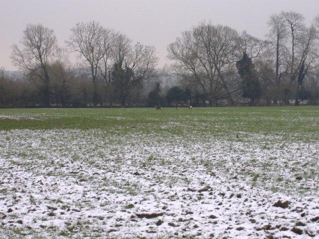 Avon meadow