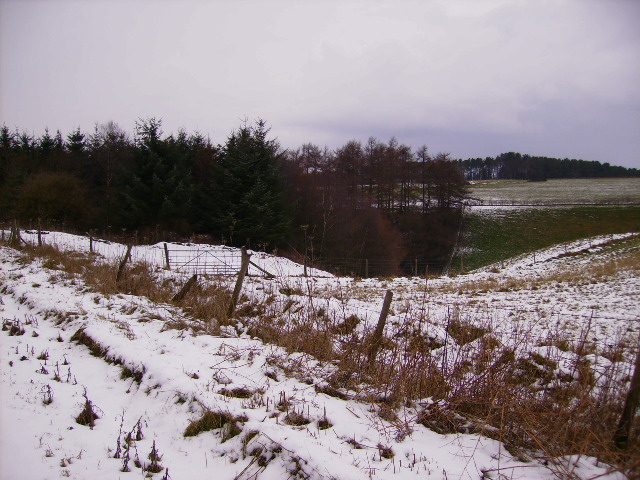 Looking across Seive Dale in Dalby Forest