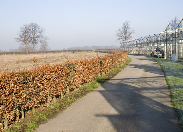Path running parallel to a nursery