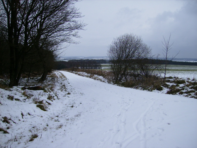 Snowy track junction in Dalby Forest