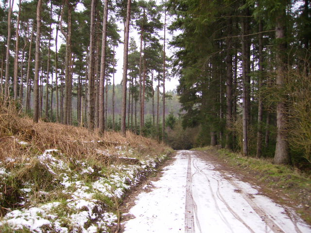 Heading towards Flax Dale in Dalby Forest