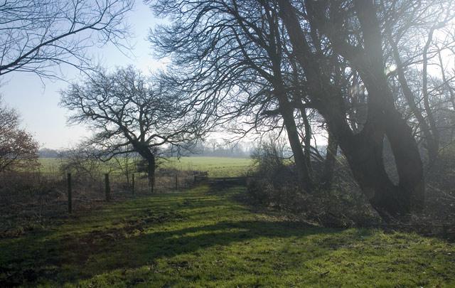 Beginning of Woodland