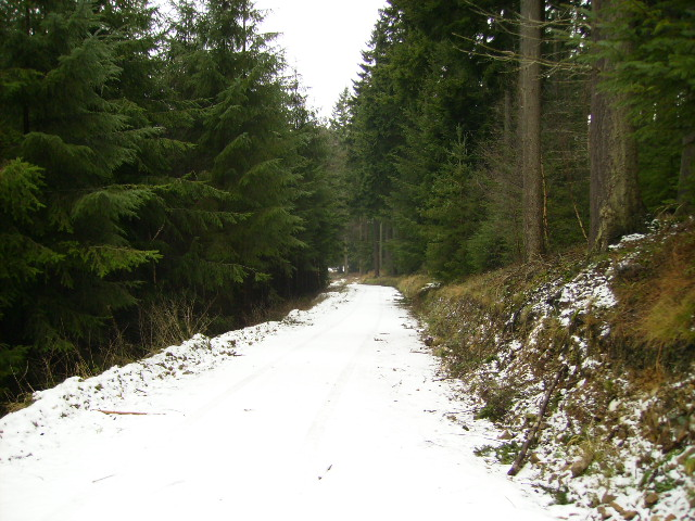 Dropping down Flax Dale in Dalby Forest