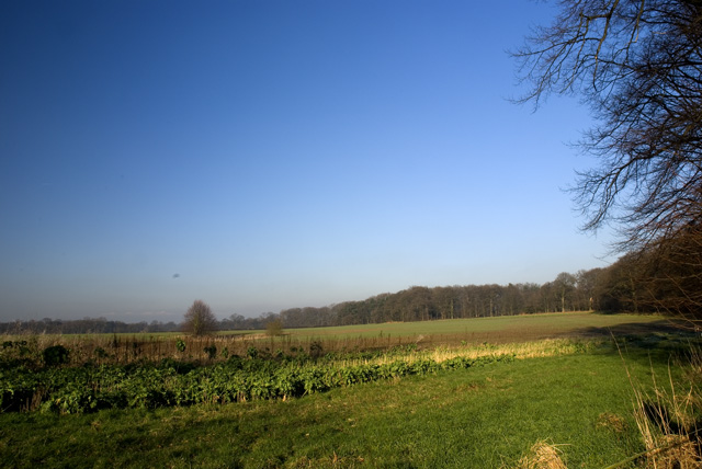 Woodland and Field (2)