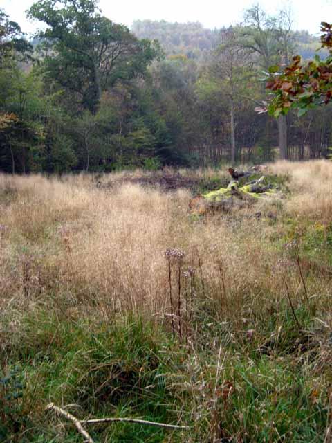Woodland near Kilgrammie