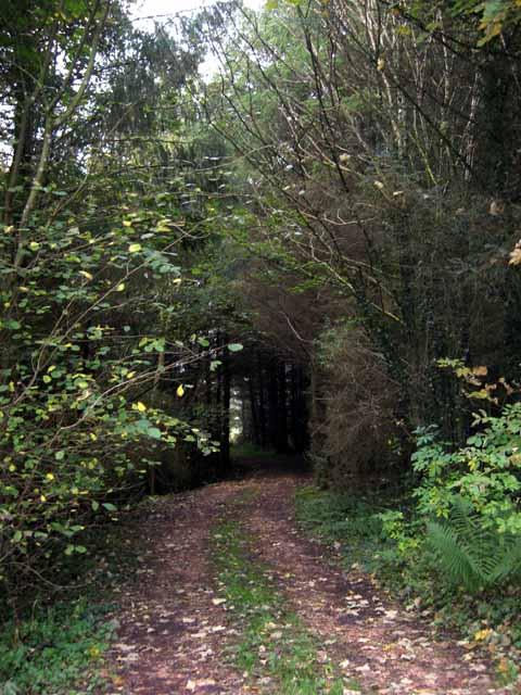 Woodland ride near Kilgrammie