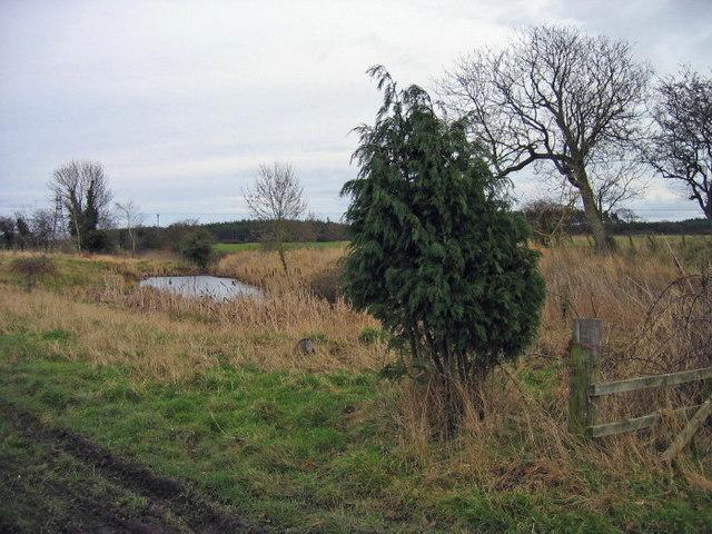 Decoy pond near Low Park