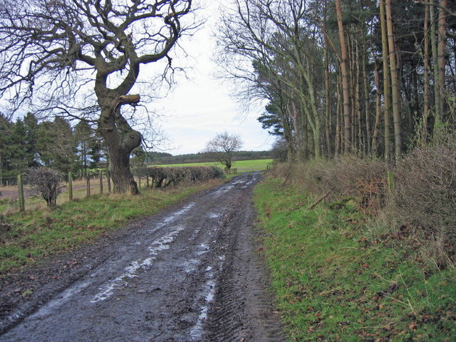 Footpath near High Park