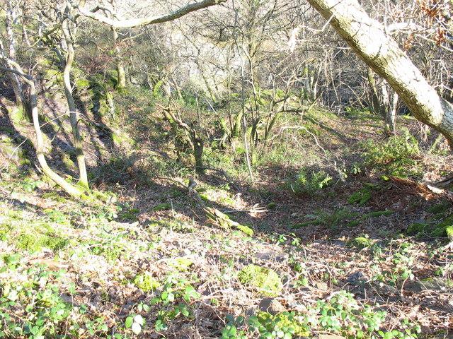 Ancient woodland at Lower Glynrhonwy Quarry