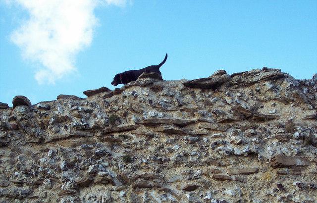 That Roman dog again!