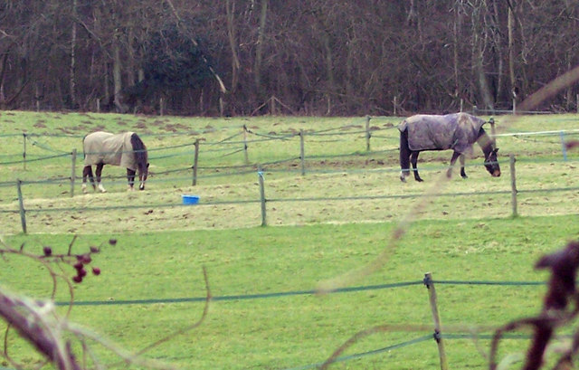 Horses grazing at Picketts Meadow Farm