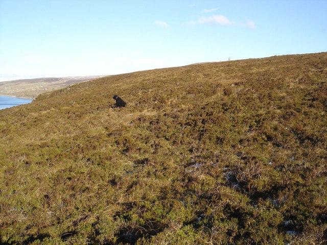 Heathery Cliff tops south of Peterburn