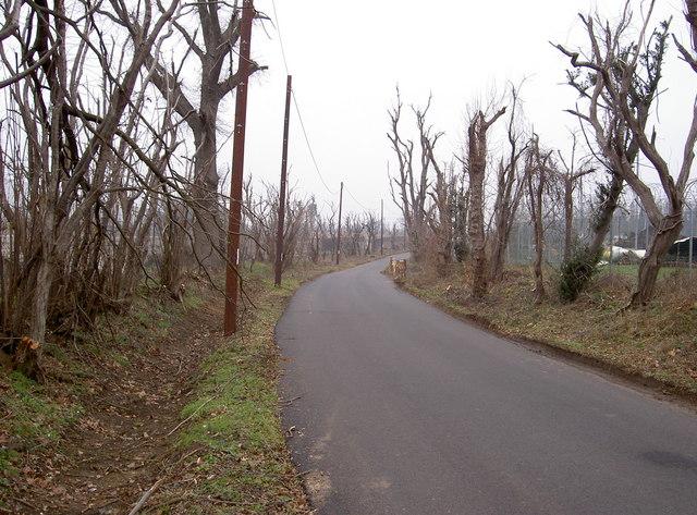 Trees in Buncefield Lane, Hemel Hempstead