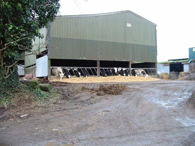 Feeding time at Guston Court Farm