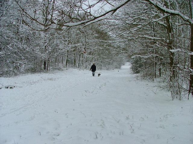Oversley Wood in snow 8th Feb 07