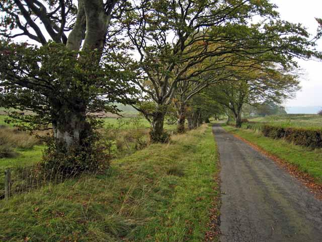 Tree-lined road near Kirkbride