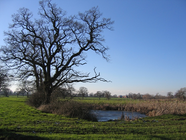 Pond and Trees from the Footpath to Dark Lane
