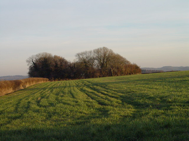Clump near South Farm