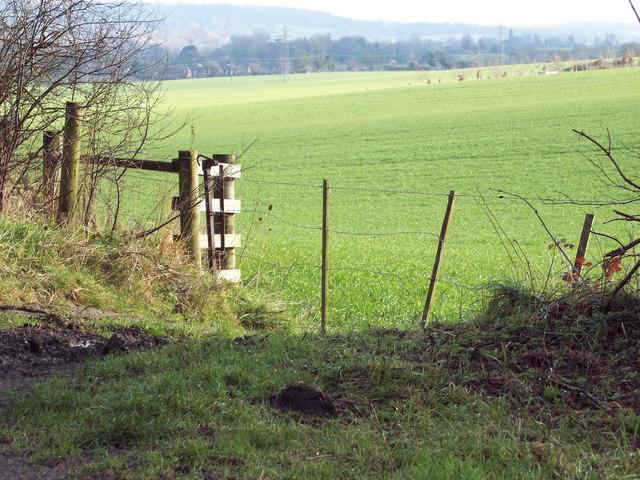 Wiltshire gate near Odstock