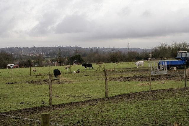 Smallholding at Lambs Green