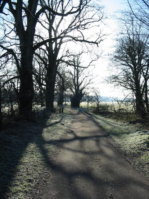 Trees near to Woodhouselees