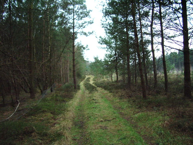 Track in Nelsonhill Wood