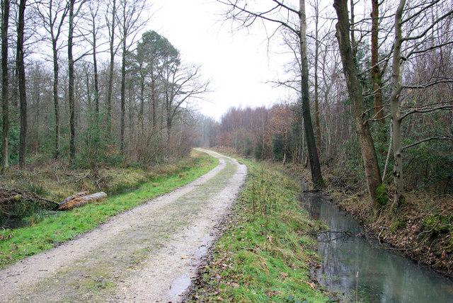 Track through Fisherlane Wood
